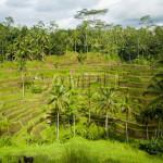 Bali03